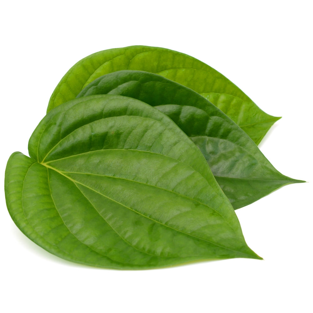 Betel-Leaf-Oil-Piper-betle-Essential-Oil-ProductPic